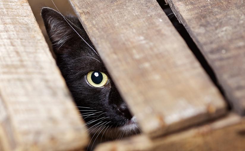 La curiosité n'est pas qu'un vilain défaut…
